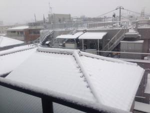 2014年2月8日--大雪--家の周辺